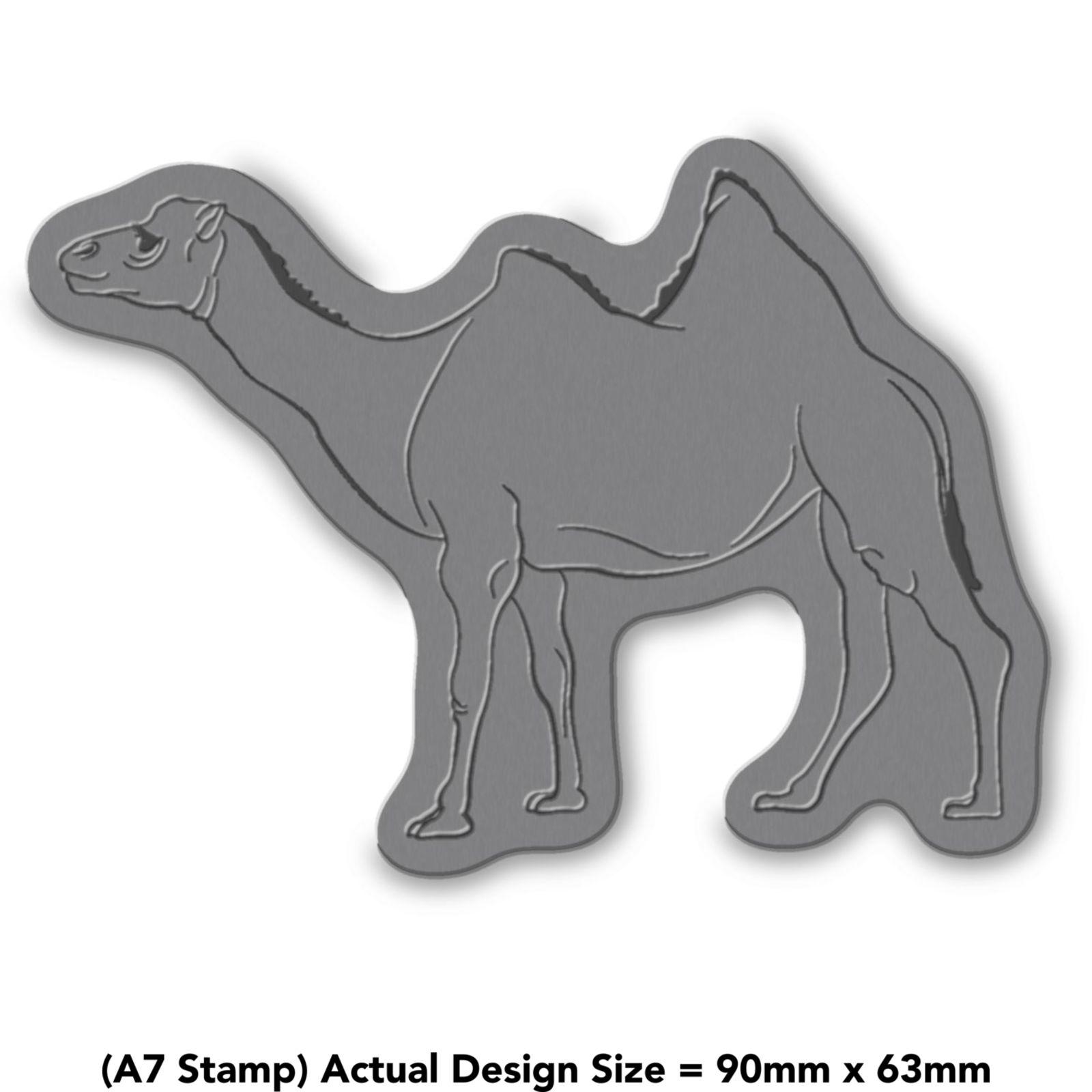 039-Camello-039-RS008146 miniatura 4