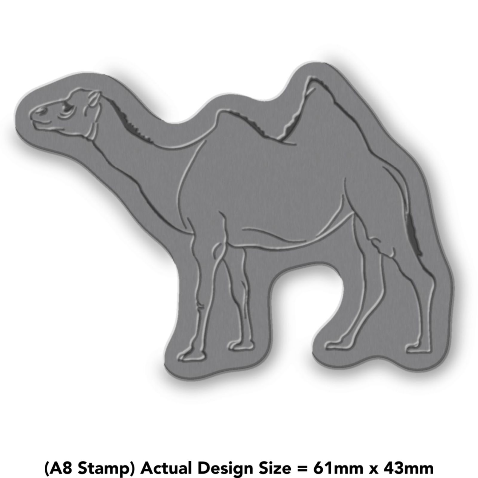039-Camello-039-RS008146 miniatura 6